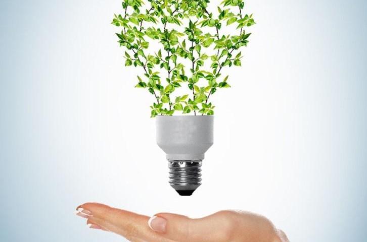 Cápsula – Emprendedores con iniciativa verde